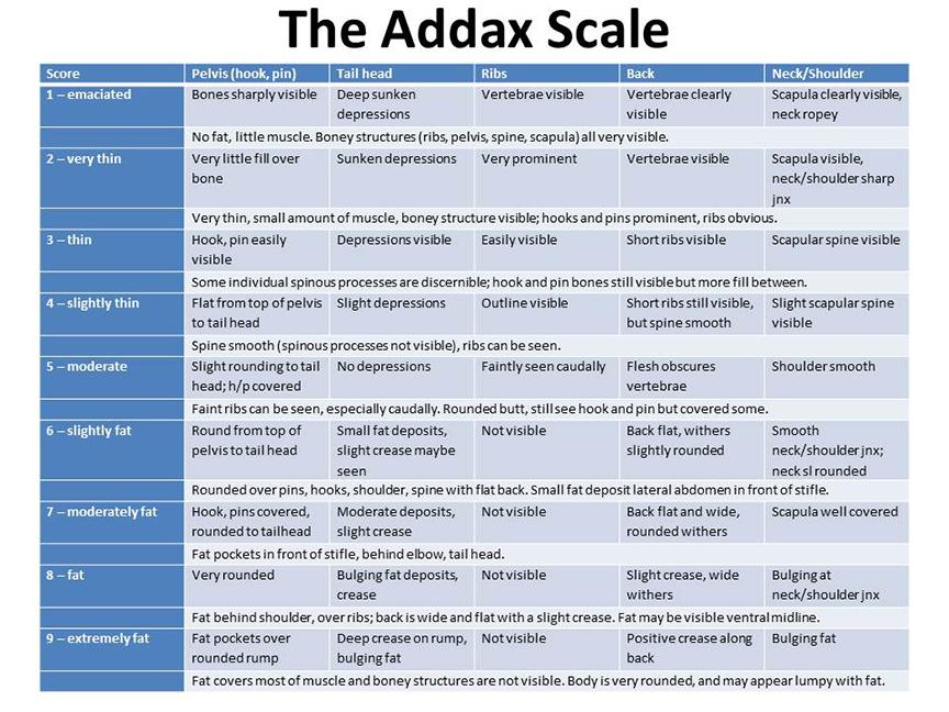The Addax Scale