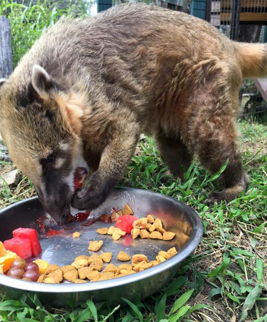 Omnivores Put The O In Opportunistic Fossil Rim Wildlife Center