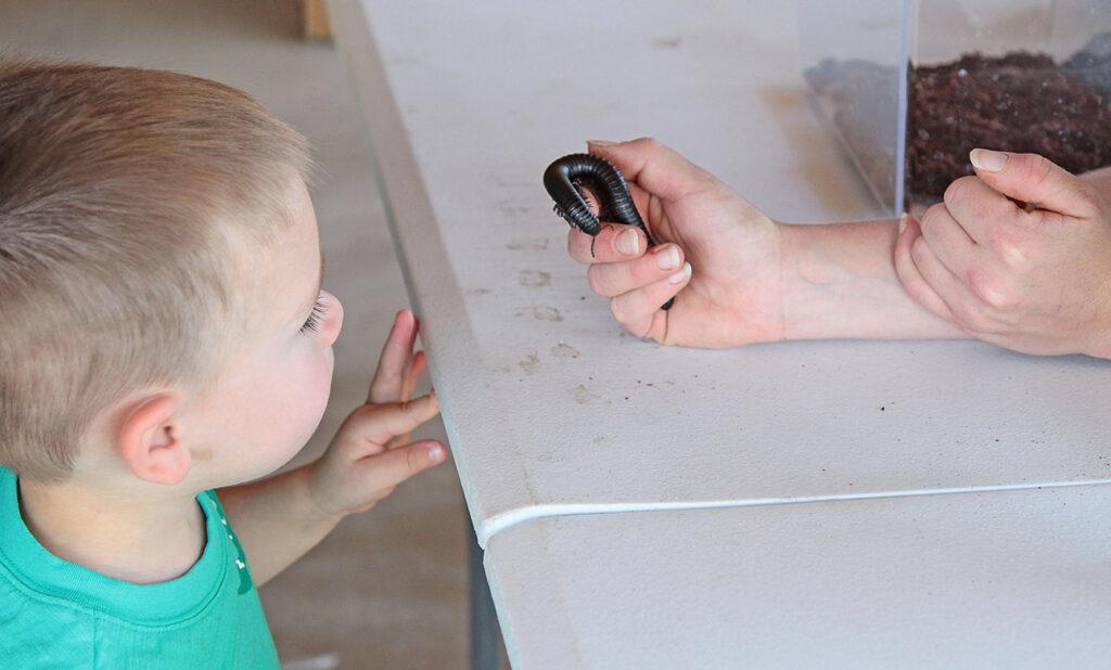 millipede shown to child